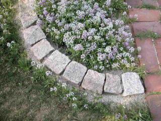 アリッサム 花壇